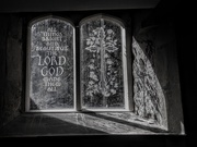 20th Jul 2020 - The Lord God Made 'em All