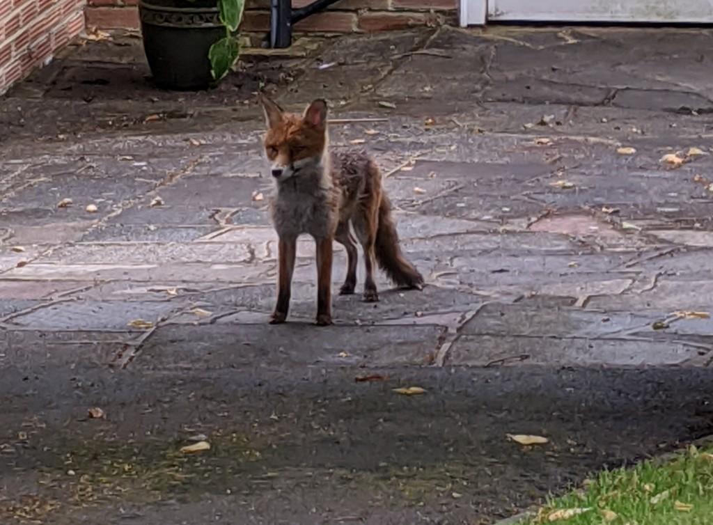 Hello Mr Fox by stephenbyrne79