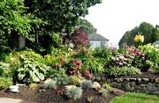 20th Jul 2020 - A rock garden