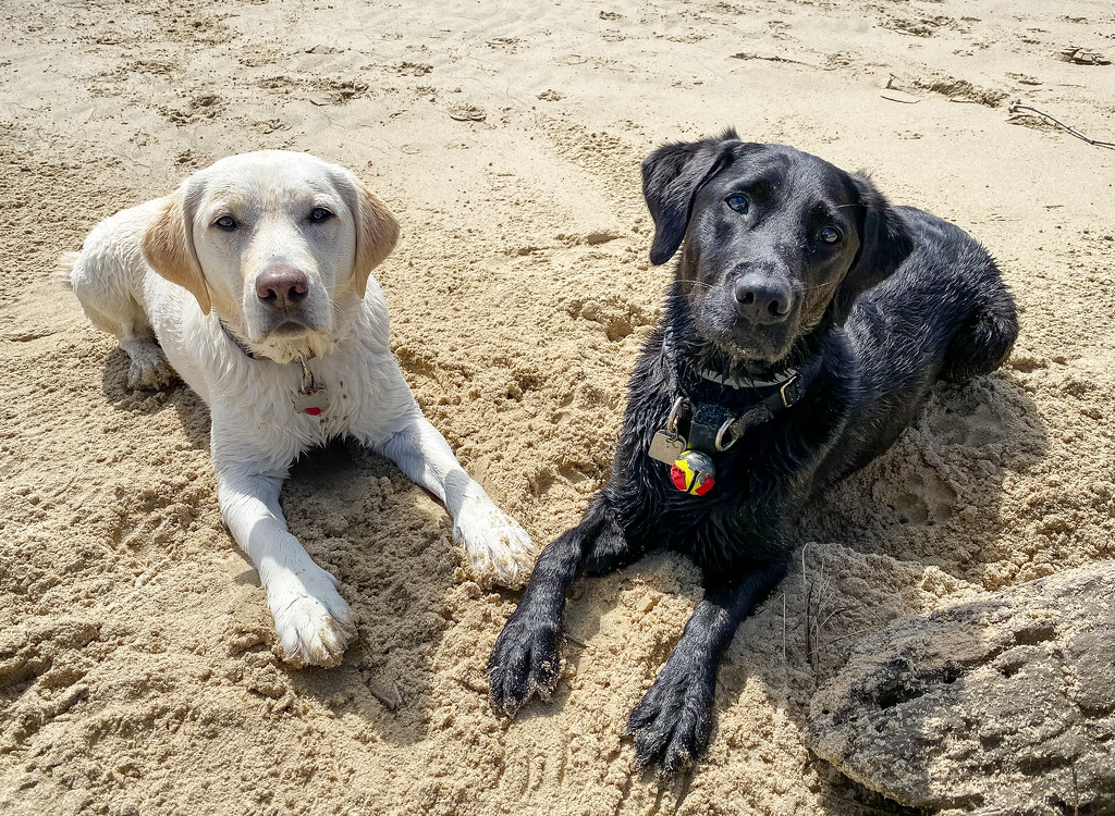 Best Friends At the Beach  by jgpittenger