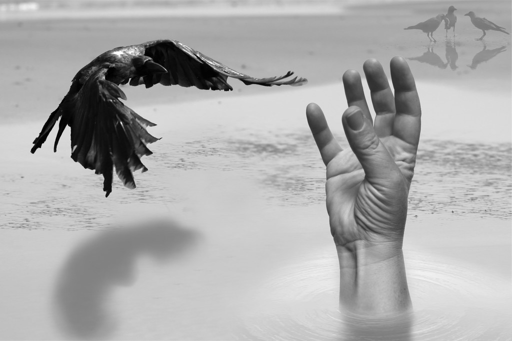 Crow and hand...  by ingrid01