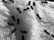 10th Jul 2020 - Ant-ics