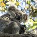 Matilda sooc by koalagardens