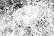 21st Jul 2020 - Tree stump, ethereal?