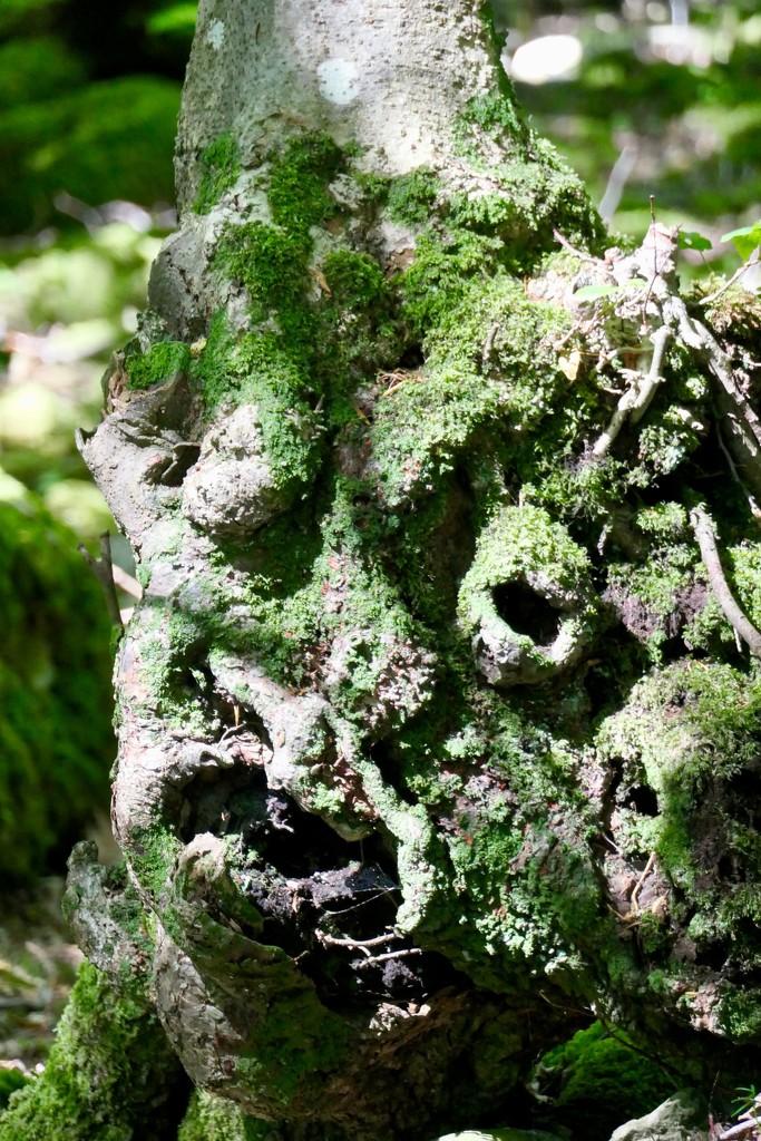 Tree gargoyle! by chris17