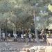 Outdoor Prayers at Tel Shiloh