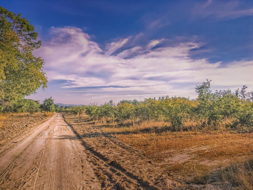 Farm Road by zambianlass