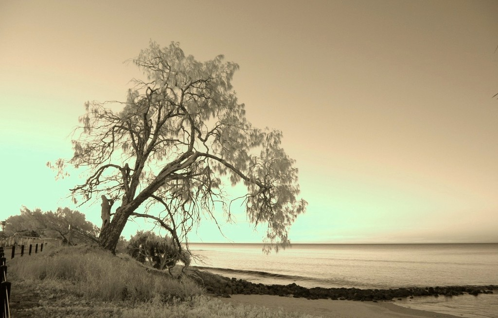 Beautiful Bagara by the sea #1 by robz