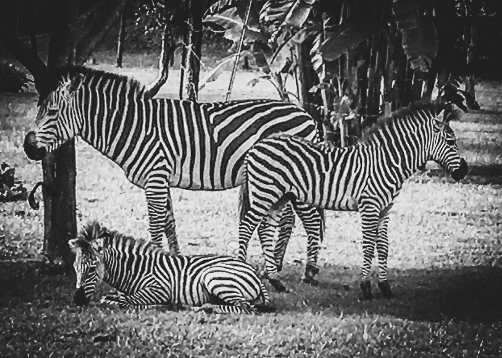 Black and White by zambianlass