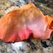 Orange petal