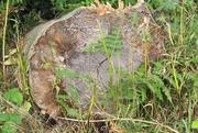 23rd Jul 2020 - Tree Stump, 3 of 3