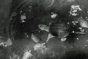 20th Jul 2020 - Turtles Floating in Space