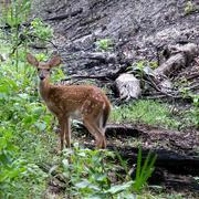 24th Jul 2020 - Dear deer, don't run away yet.