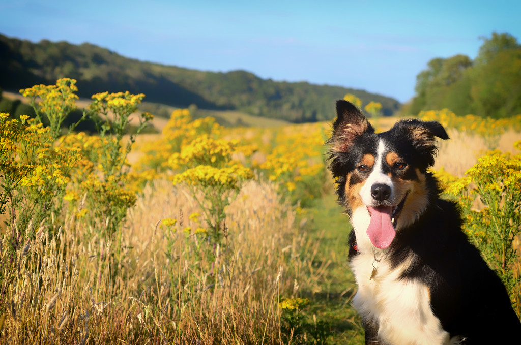 In the Ragwort by fbailey