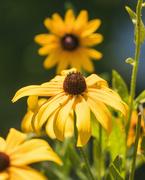 19th Jul 2020 - Villa garden flower