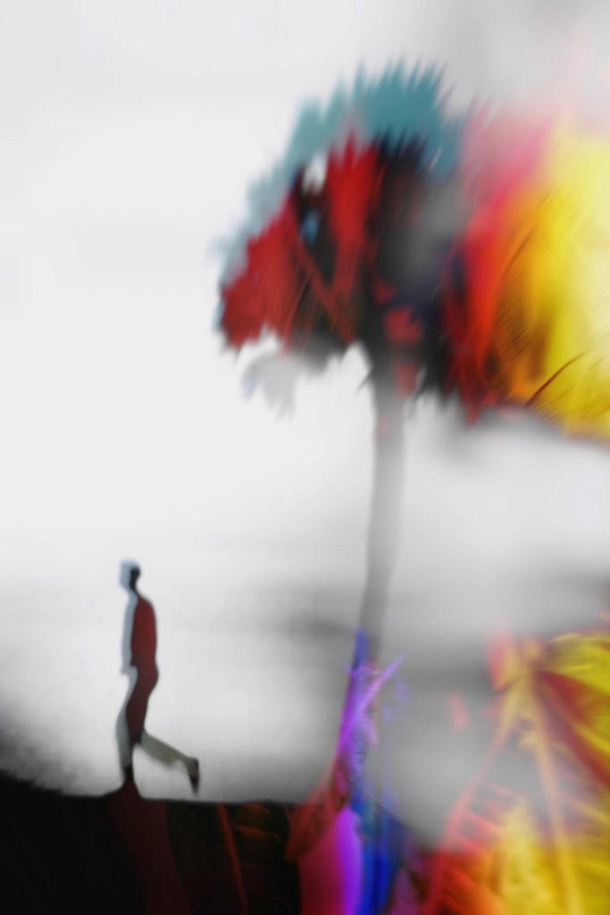 Under the PALMbrella by joemuli