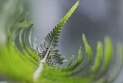 25th Jul 2020 - Beyond the Frond