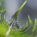 Beyond the Frond