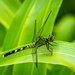 Green Dragon Fly by marylandgirl58