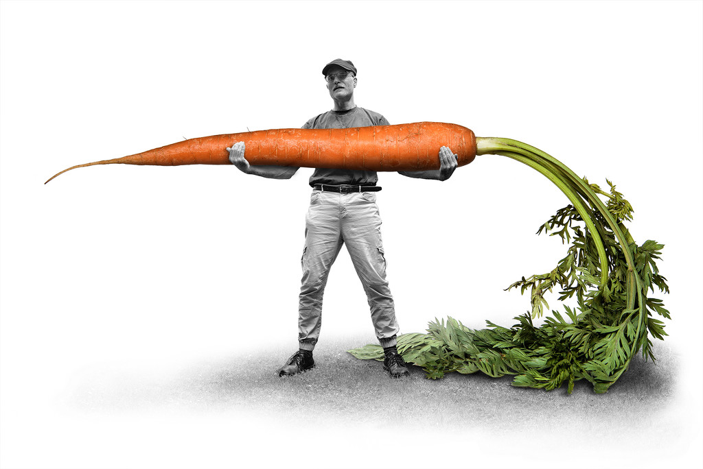 carrot from my vegetable patch by jerome