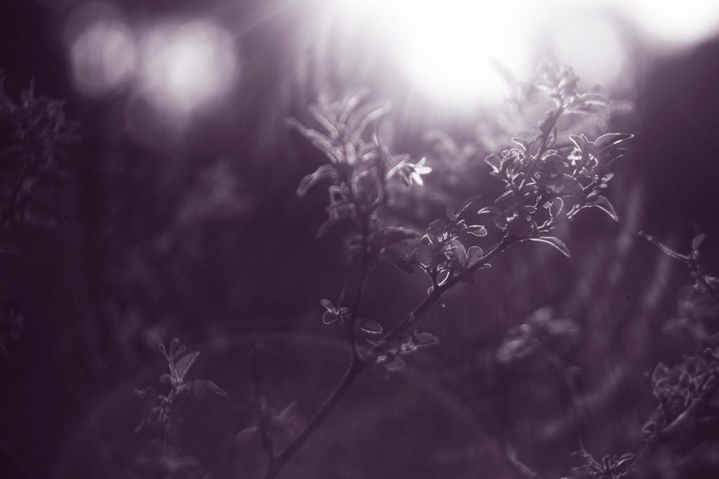 nightshade by kali66