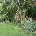 My Garden July 2020