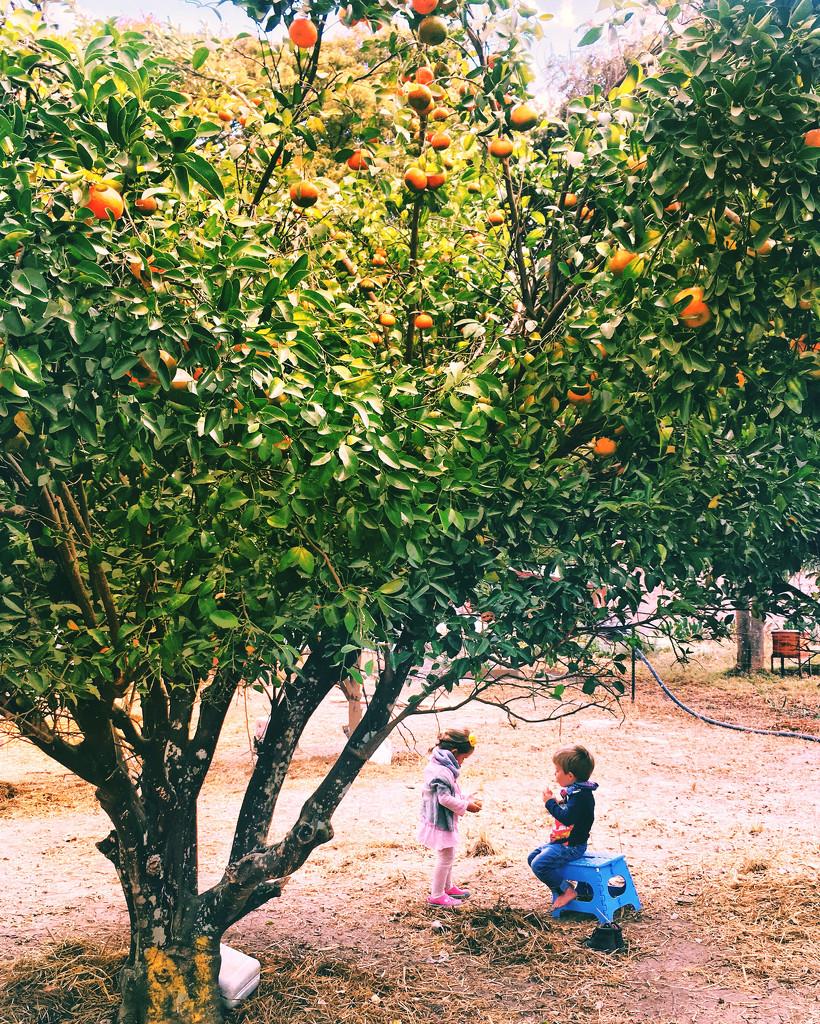 Orchard Fun by zambianlass