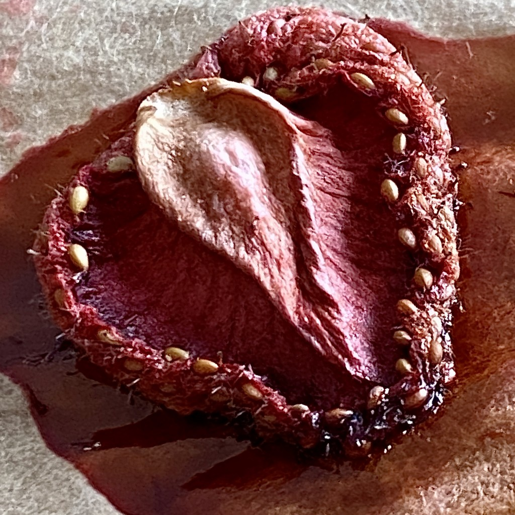Dried strawberry by stimuloog