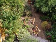 10th Jul 2020 - Three foxes