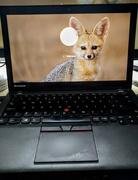 15th Jul 2020 - Desert fox