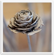 26th Jul 2020 - a rose by any other name.....
