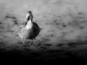 25th Jul 2020 - this duck's got a plan!