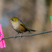 Bird on a wire - with pegs! by maureenpp