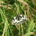 marble white in the meadows