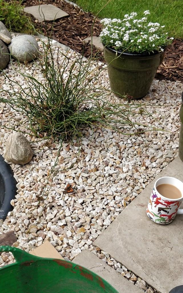 Daily al fresco cuppas by roachling
