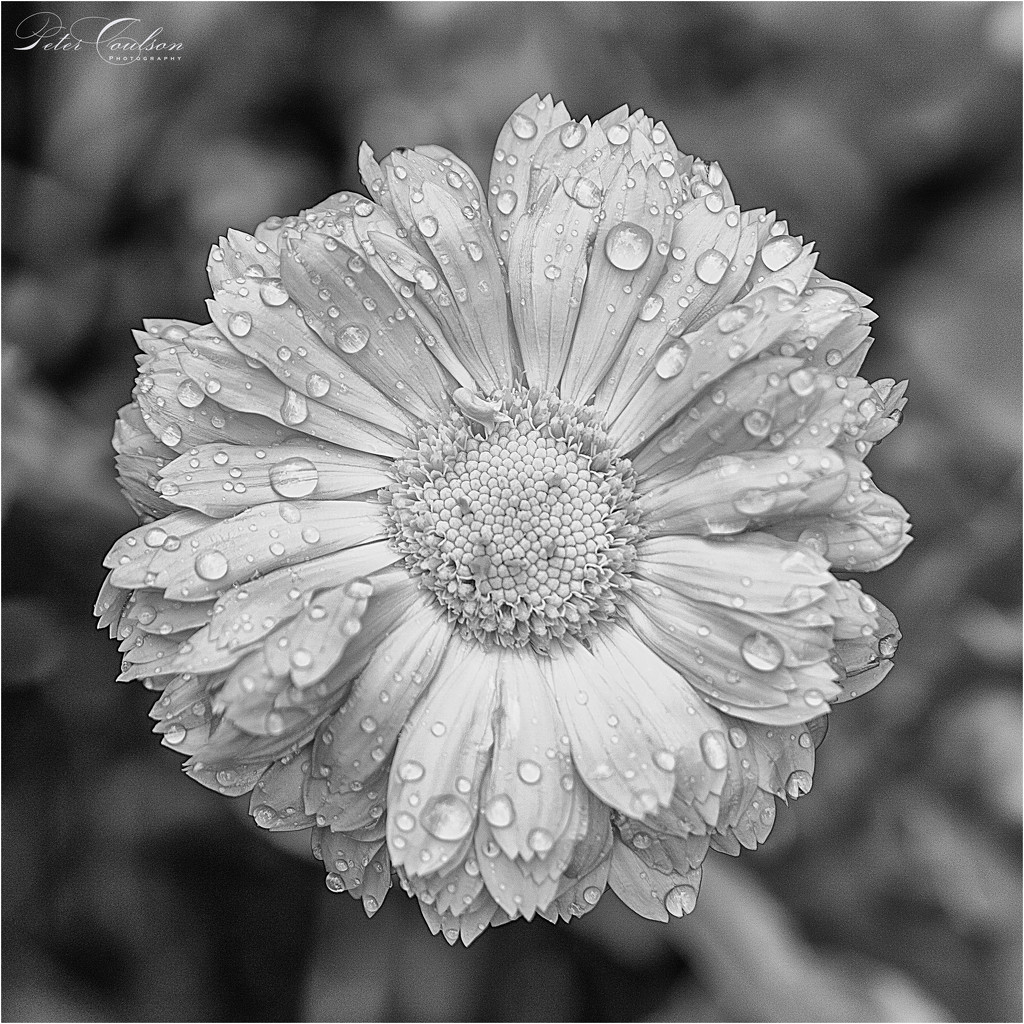 Droplets by pcoulson