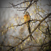 Mousebird                        (Best on black) by sdutoit