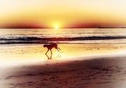 27th Jul 2020 - Romp on the Beach
