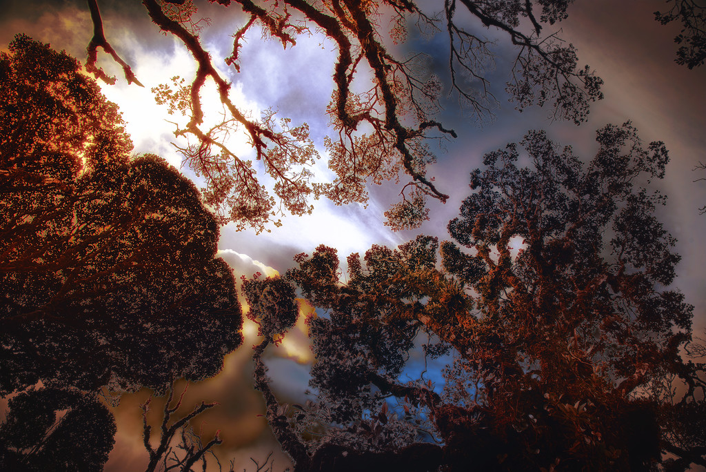 Belum Rainforest by jerome