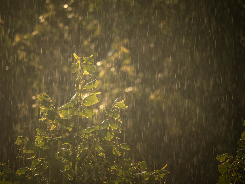 Lime in the sun and rain by haskar