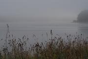 28th Jul 2020 - Ducks on Trémelin Lake