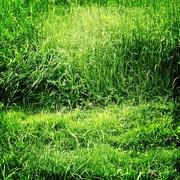 28th Jul 2020 - As green as grass