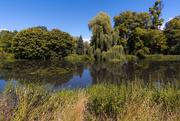 26th Jul 2020 - River Lea