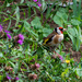 Goldfinch in the flowers by stevejacob