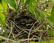 28th Jul 2020 - Crowed nest