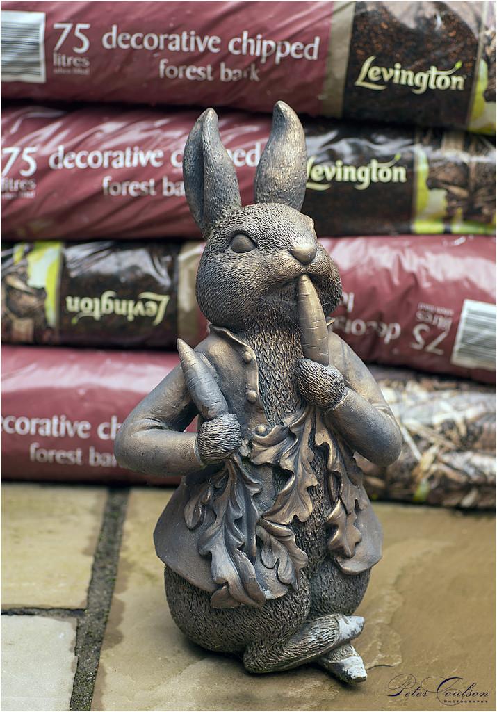 Back Yard Rabbit by pcoulson