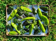 28th Jul 2020 - Fresh Peppers