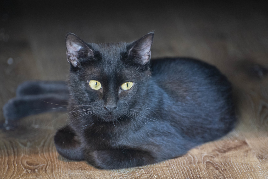 Momma cat Freya by dfarrington