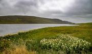 29th Jul 2020 - Tingwall Loch