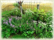 30th Jul 2020 - garden